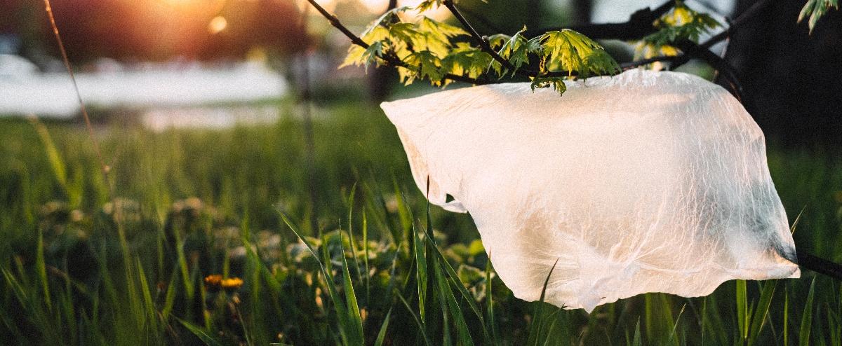 Canva - Plastic On Grass-1